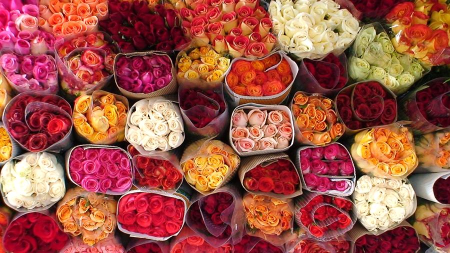 Как и где можно купить розы оптом дешево