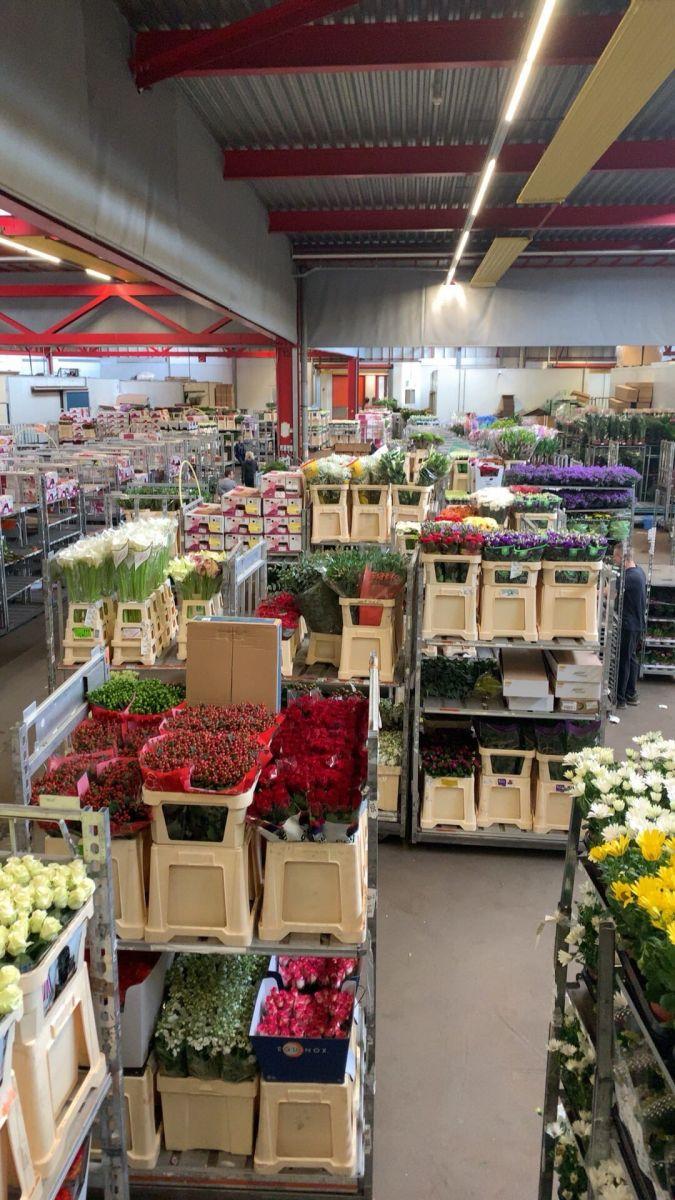В Голландии закончился сезон рассады цветочных уличных (perkplanten)!